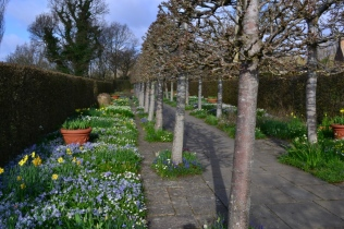 The Lime Walk in all its glory as seen today.