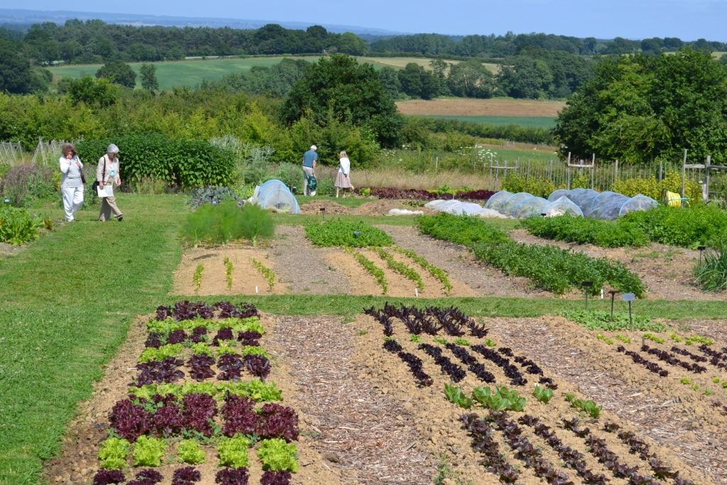 Veg Garden No Dig   Copy