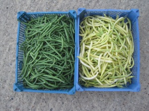 Two Baskets of French Beans