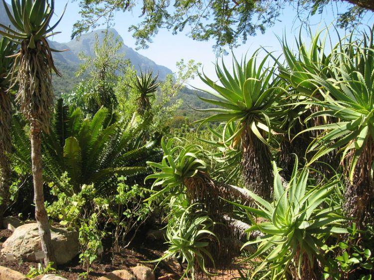 Kirstenbosch Botanical Garden Image by Britt Storlykken Hellend