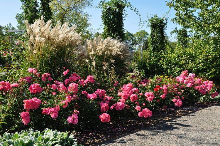 Sangerhausen Rose Garden Author Наталия19