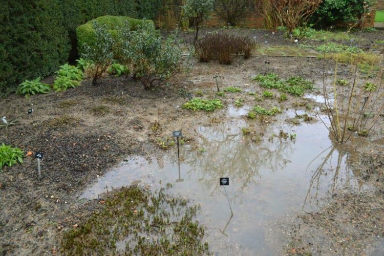 The flooded beds 2014
