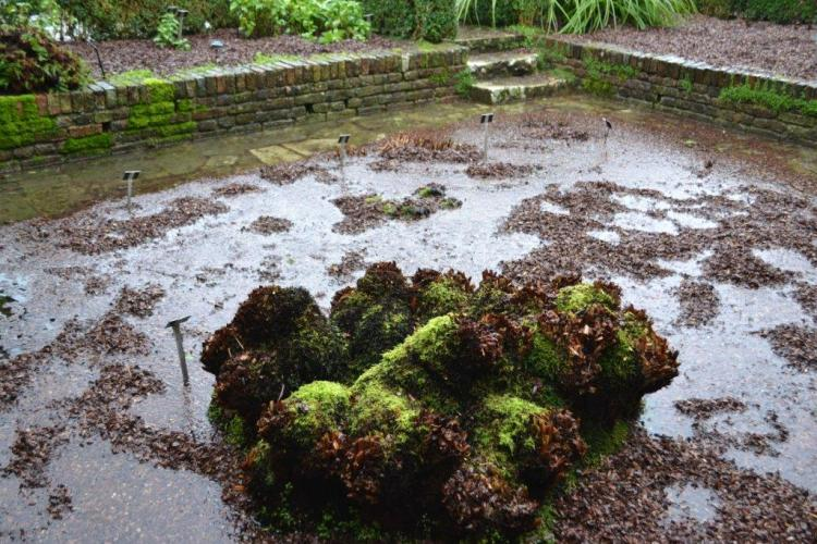 February 2014, the flooded Sunk Garden.