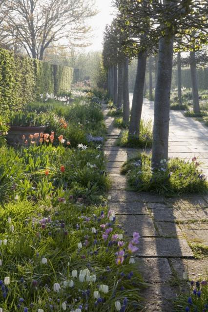 The Lime Walk with spring planting at Sissinghurst Castle Garden, near Cranbrook, Kent