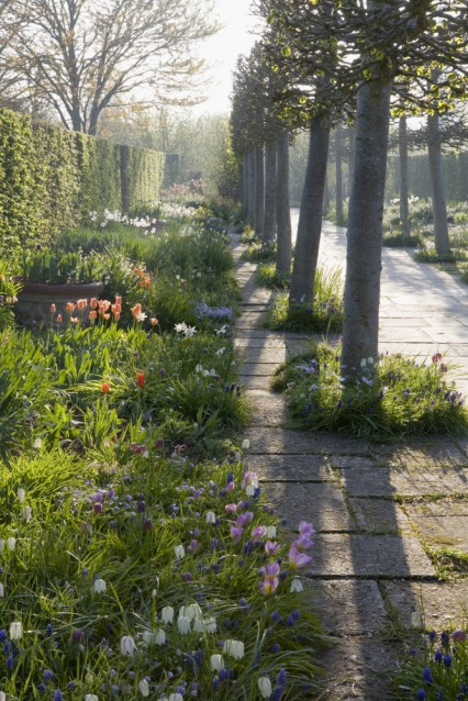 The Lime Walk with spring planting at Sissinghurst Castle Garden, near Cranbrook, Kent