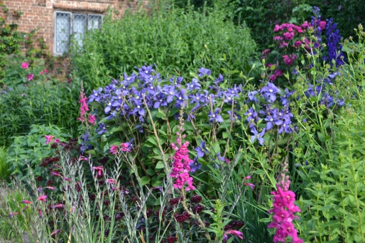 Antirrhinum major 'Apollo Purple' and Clematis x durandii