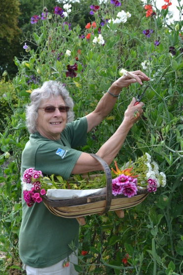 Mitzi picking sweet peas