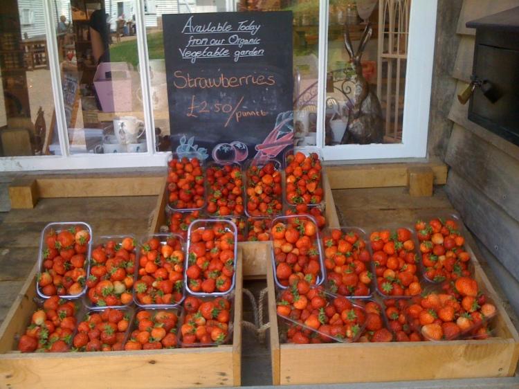 Selling our strawberries at Sissinghurst.