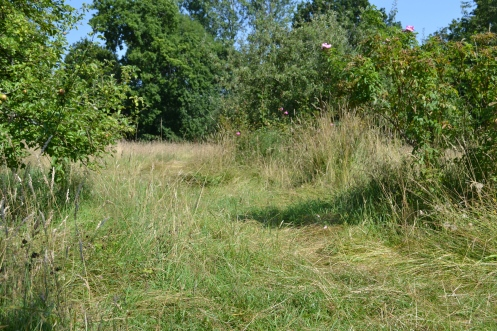 Trodden pathways through the grass
