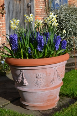 Narcissus 'Avalanche' and Hyacinth 'Delft Blue'