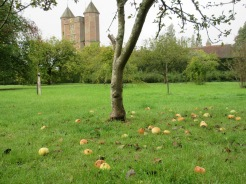 The orchard in October.
