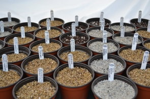 Sowing Seeds; the first step of the process