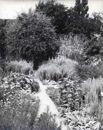The first photo of the White Garden in the Nicolson family archives 1977. Copyright Adam Nicolson.