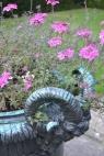 Verbena 'Sissinghurst'