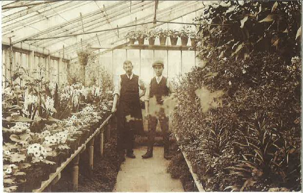 Vita's glasshouse, probably taken in the 1950's.