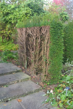 The Herb Garden hedge after renewal.