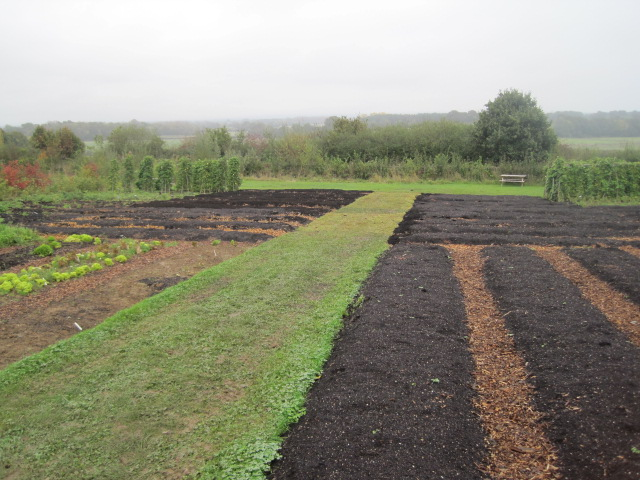Big changes in the Vegetable Plot