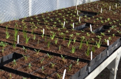 Potted on seedlings