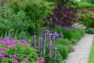 The Purple Border: an example of Vita's single colour planting schemes
