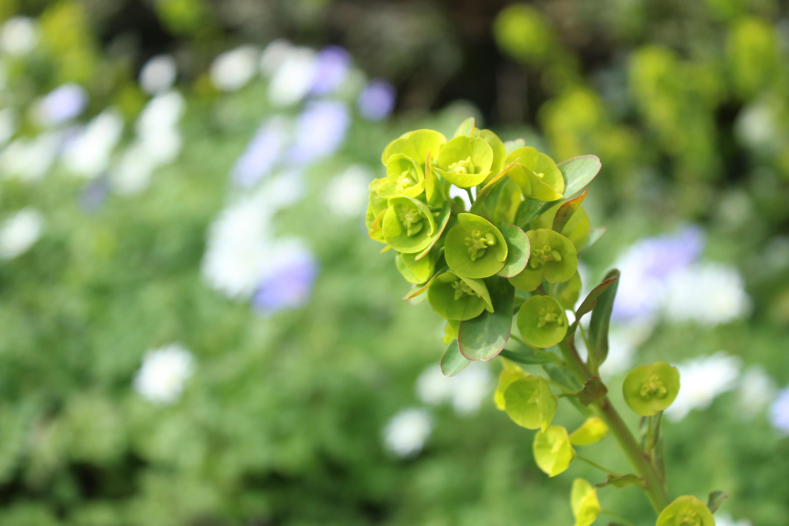 My Top Five Spring Flowers Sissinghurst Garden