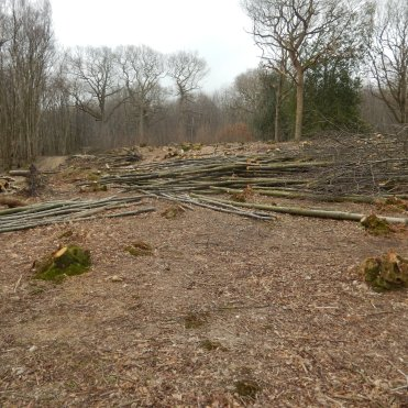 The coppiced wood will be used for products.