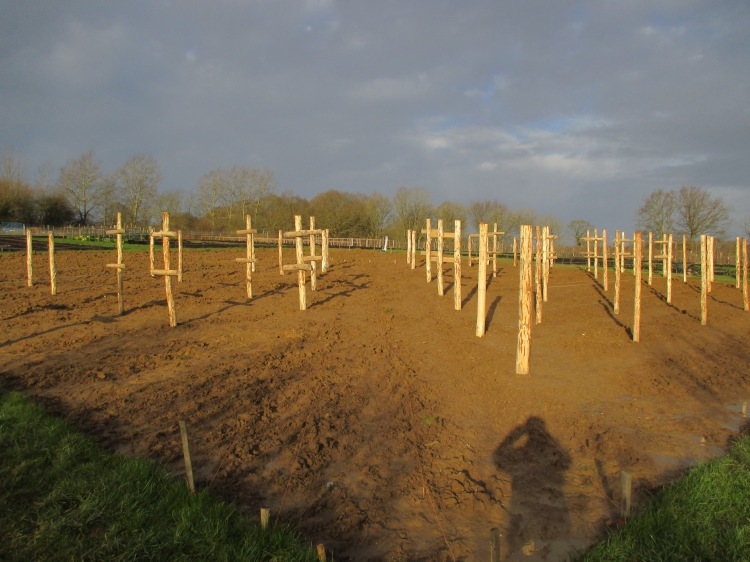The new chestnut posts