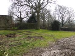 Main Area - Before Tree