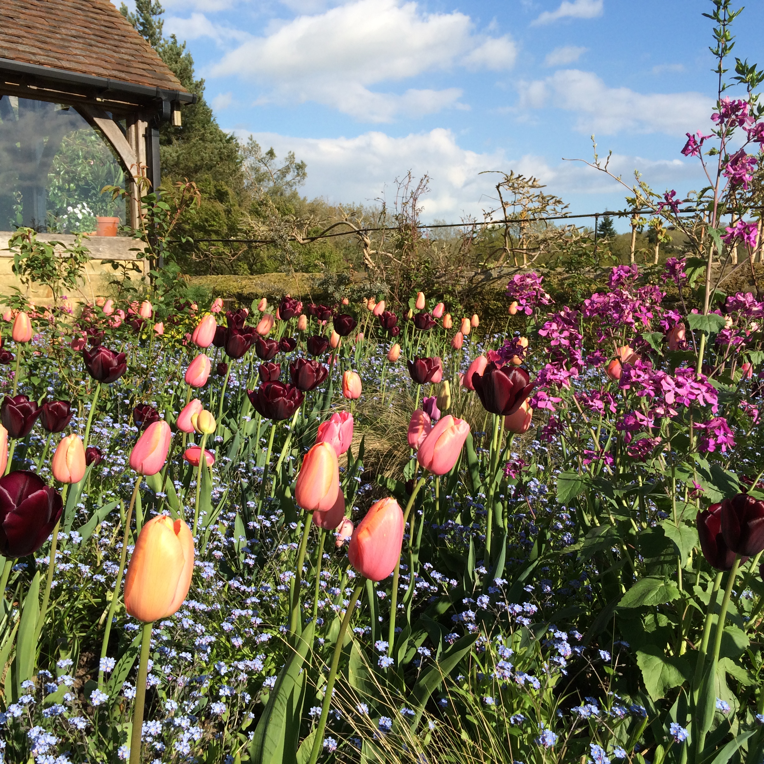 My Top Five… Tulips | SISSINGHURST GARDEN