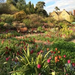 Tulips en masse at Gravetye Manor