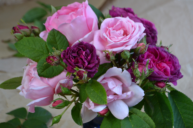 The posy of all five roses