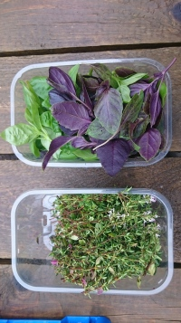 Basil and Thyme