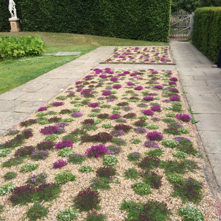 Thyme lawns