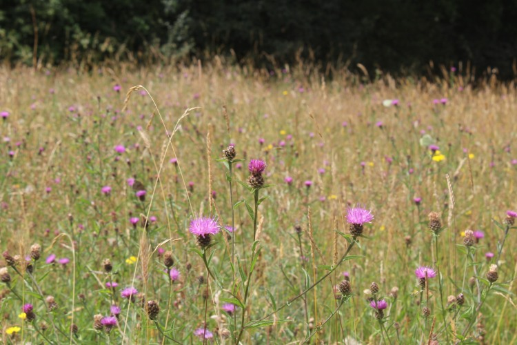 Marden Meadow