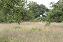 Meadow grass in the Orchard.