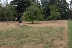 Strewing the hay.