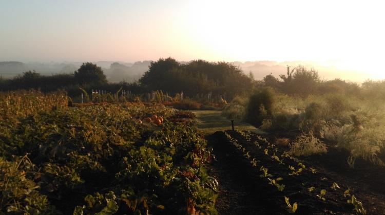 Morning light in the Vegetable Garden