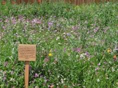 The wild flower border