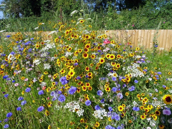 The wild flowers in high summer.