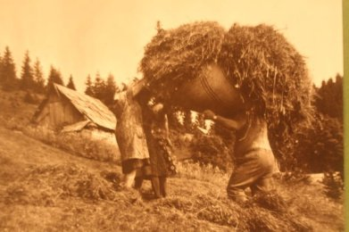Collecting in the hay