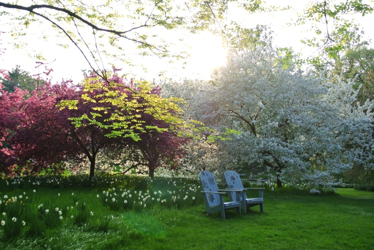 Blossom and seats