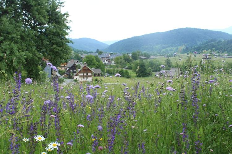 meadow in village