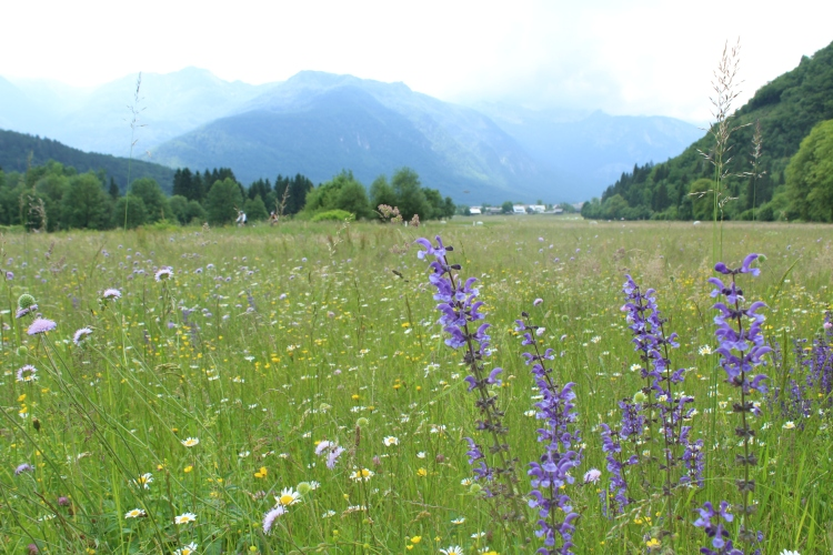 Slovenia meadows